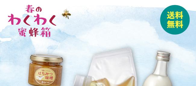 春のわくわく蜜蜂箱